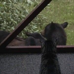 Sadie and Bear
